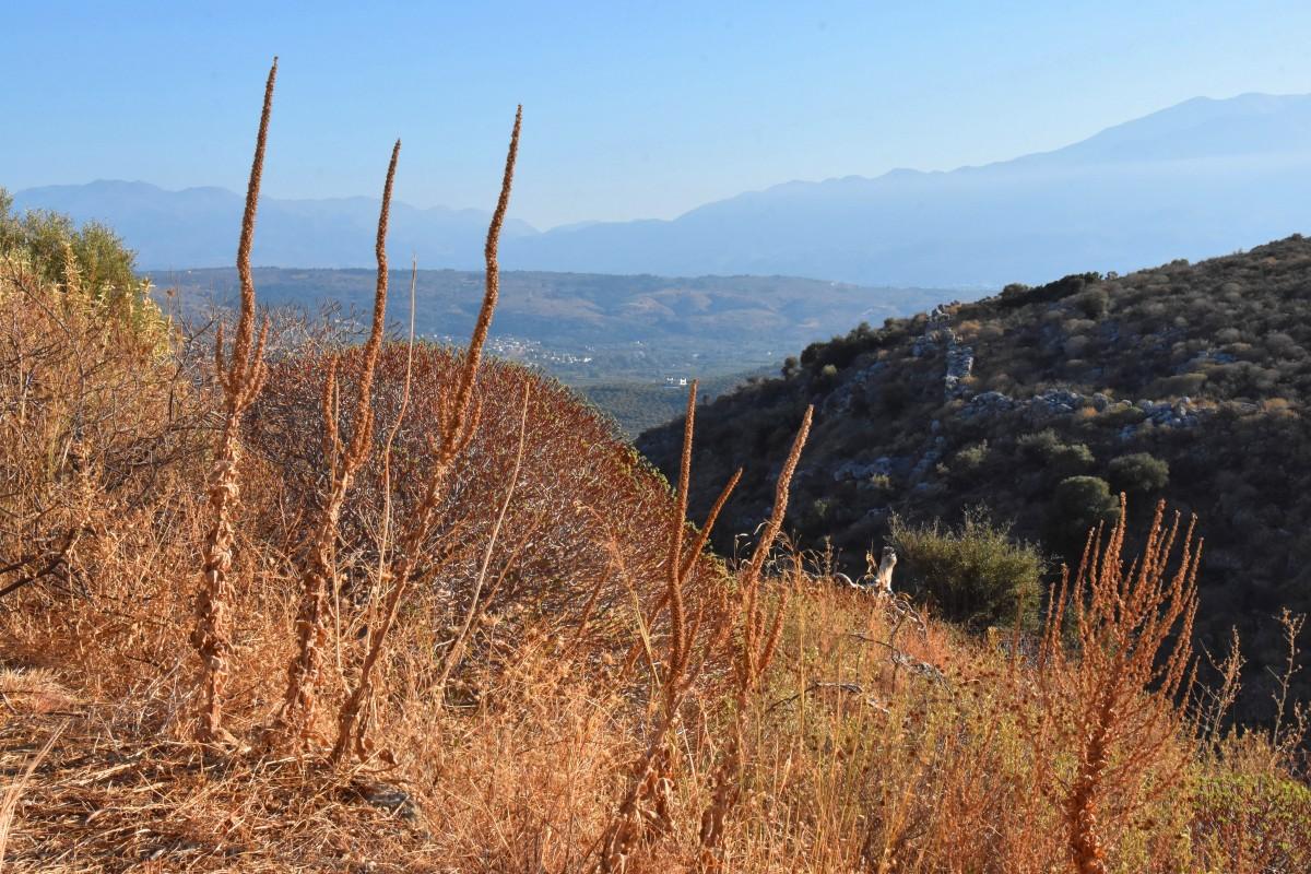 Zdjęcia: okolice Aptery, Kreta, Widok z okolic Aptery, GRECJA