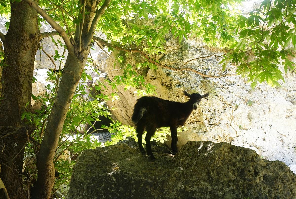 Zdjęcia: Wąwóz Topoliana, Kreta, Zagubiona, GRECJA