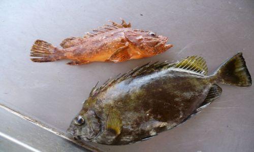 Zdjęcie GRECJA / Kreta / Rethymnon / Świeża rybka na lunch