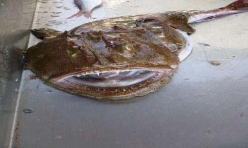 Zdjęcie GRECJA / Kreta / Rethymnon / Żarłacz :-)