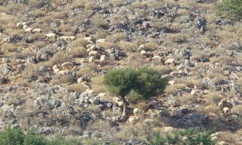 Zdjecie GRECJA / - / Kreta / Wypas owiec