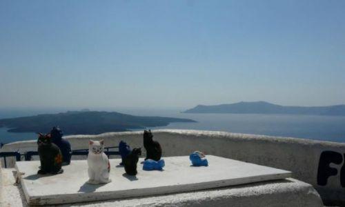 Zdjecie GRECJA / Santorini / Santorini / Koty