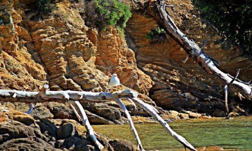 Zdjecie GRECJA / - / Wyspa Skhiatos / Skiathos
