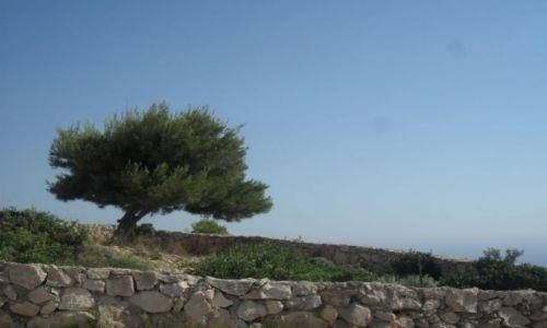 Zdjecie GRECJA / Zakynthos / Anafonitria / w drodze do zatoki wraku