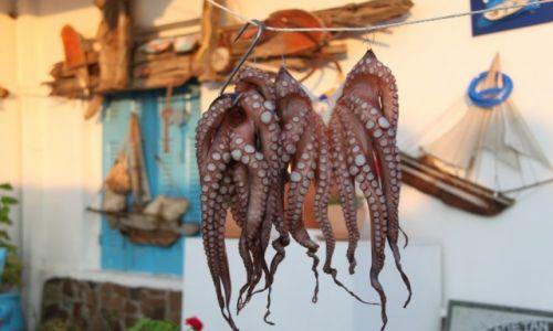 Zdjęcie GRECJA / Cyklady Milos / Pollonia / Ośmiorniczkę?