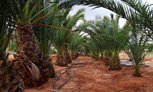 Zdjęcie GRECJA / Kreta Wsch. / Malia / Palmowy ogród.