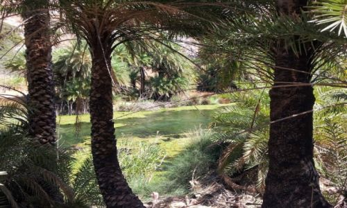 Zdjęcie GRECJA / Kreta / Preveli / Las Palmowy - Preveli