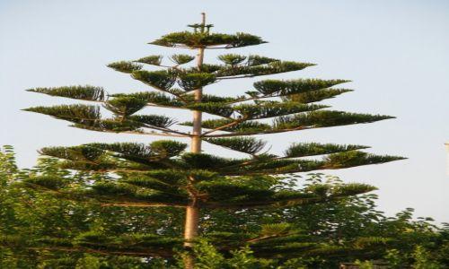 Zdjecie GRECJA / Peloponez / Kakovatosh / drzewo