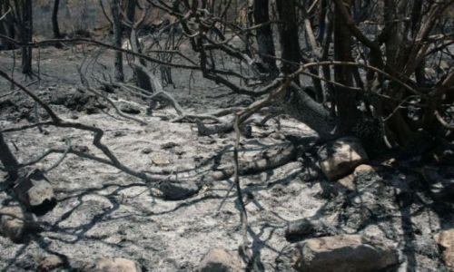 Zdjęcie GRECJA / Messenia / Wzgórza w okolicy miejscowości Maniaki / Messenia spalony las