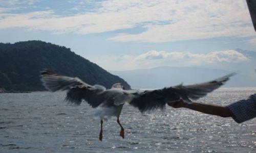 Zdjecie GRECJA / brak / gdzieś na wodzie/ św. góra Athos / Ptasior