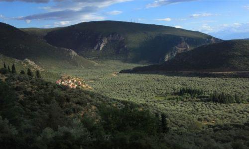 Zdjęcie GRECJA / Góry Parnas / Okolice Delf / Gaje oliwne