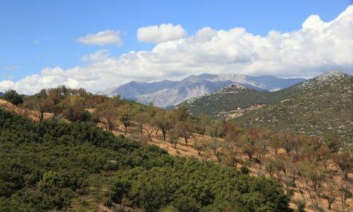 Zdjęcie GRECJA / Beocja / W pobliżu miasta Distomo / Plantacje