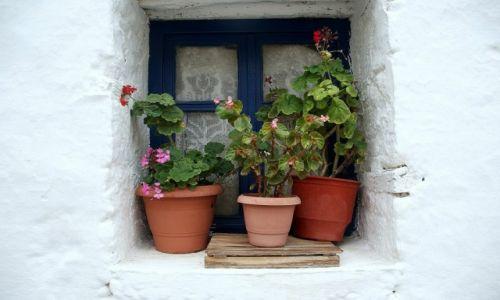 GRECJA / Nisyros / Nisyros / Kwiaty w okienku