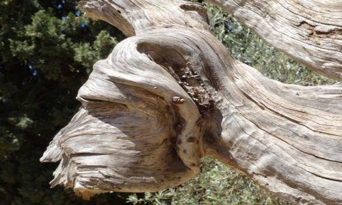 Zdjecie GRECJA / - / Kreta / Rzeźbiarz : Natura