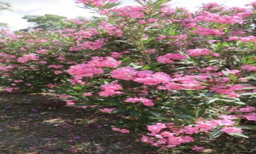 Zdjęcie GRECJA / Kreta / Gortyna / kreteńska flora