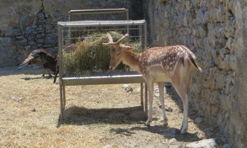 Zdjęcie GRECJA / Kreta / klasztor Preveli / klasztor Kato Preveli