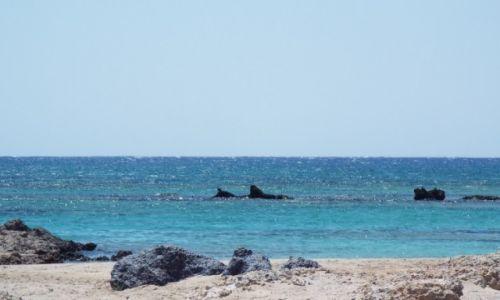 Zdjecie GRECJA / Kreta / Elefonissi / skalne delfiny