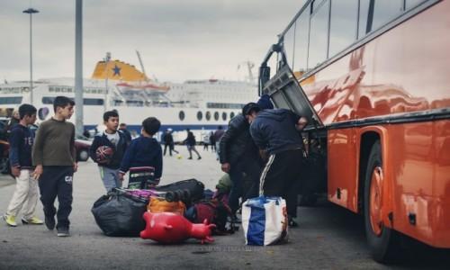 Zdjęcie GRECJA / Attyka / Pireus / Krowa
