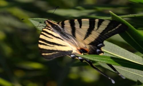 GRECJA / Kreta / Ag. Pelagia / Jurasem nie jestem ;-) motylem nie b�d�...