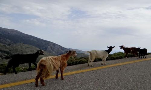 Zdjęcie GRECJA / Kreta / górska droga / Gdzieś w górach Krety.