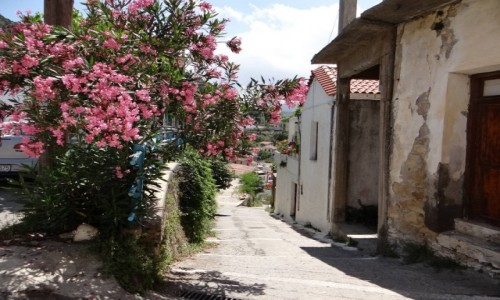 Zdjecie GRECJA / Kreta / Argyroupolis / W uliczce Argyr
