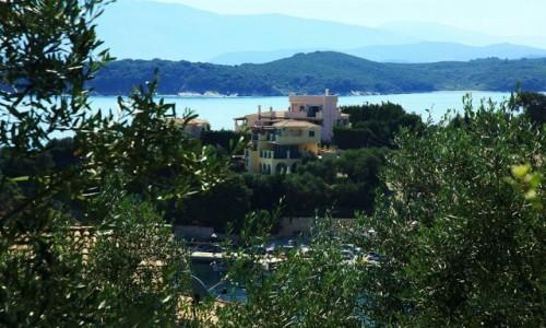 Zdjecie GRECJA / Korfu / Kassiopi / Z oliwnego sadu