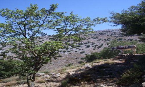 Zdjecie GRECJA / Kreta / gdzies w górach / Kreta
