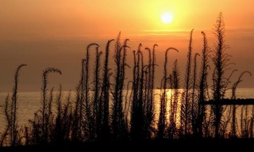 Zdjęcie GRECJA / Riwiera Olimpijska / Paralia / W stronę słońca