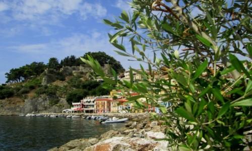 GRECJA / Epir / Parga / Zza drzewka oliwnego