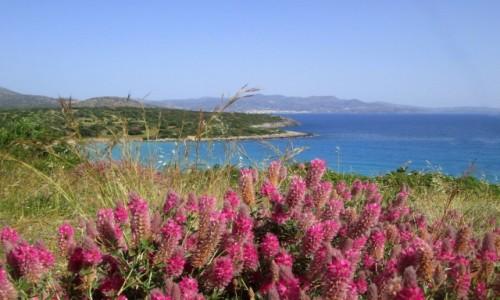 Zdjecie GRECJA / Kreta Wschodnia / okolice Agios Nikolaos / Fioletowo mi..