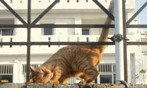 Zdjęcie GRECJA / Kreta Wschodnia / Stalida / Wyginam śmiało ciało