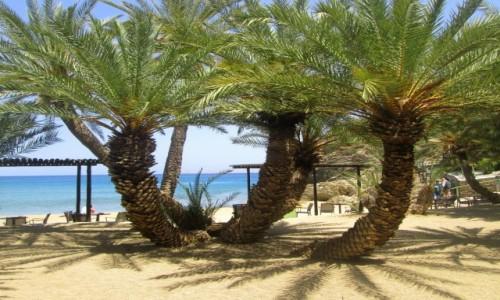 Zdjęcie GRECJA / Kreta Wschodnia / Vai / Palmy z plaży Vai