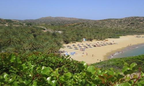 Zdjecie GRECJA / Kreta Wschodnia / Vai / Plaża palmowa