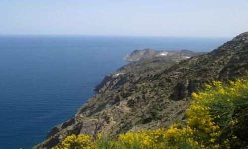 GRECJA / Kreta Wschodnia / okolice Agios Nikolaos / Żarnowiec na zboczach
