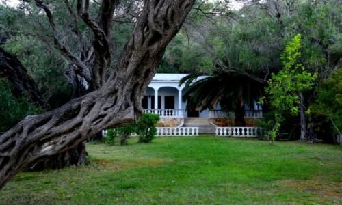 Zdjęcie GRECJA / xxx / Korfu / Posiadłość wśród drzew oliwnych