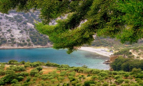 Zdjęcie GRECJA / Thassos / okolice Aliki / Szmaragdowa zatoczka