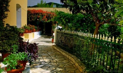 Zdjecie GRECJA / Korfu /  Paleokastritsa. / Jak Grecja to Kwiaty!