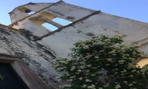 GRECJA / Korfu / Perithia / Old Perithia - storczyk na tle ruin kaplicy