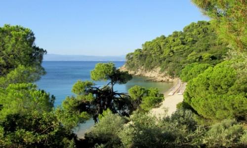 GRECJA / Sporady Północne / Skiathos - okolice Koukounaries / Plaża Xenia