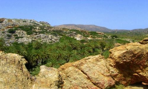 Zdjęcie GRECJA / Kreta Wschodnia / Vai / Krajobraz z palmami