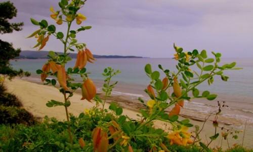 GRECJA / Thassos / okolice Limenarii / Widok na morze