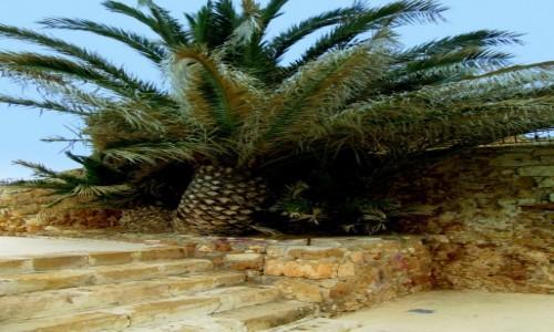 Zdjecie GRECJA / Kreta Zachodnia / port w Chanii / Palma w betonie