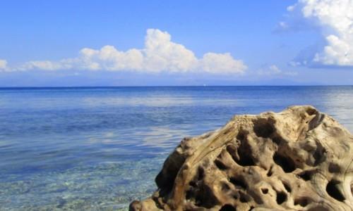 Zdjecie GRECJA / Korfu / okolice Benitses / Wyrzucone na brzeg