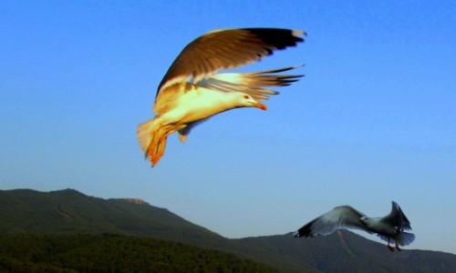 Zdjecie GRECJA / Thassos / W drodze z Kavali do Limenas / W słońcu i w cieniu