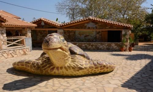 Zdjecie GRECJA / Wyspy Jońskie - Zakynthos / Gerakas / ośrodek ratowania żółwi morskich