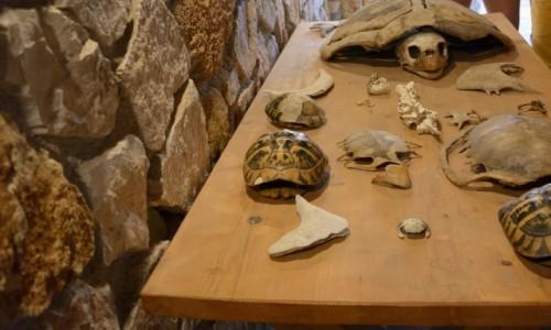 Zdjecie GRECJA / Wyspy Jońskie -Zakynthos / Gerakas  / szkielety żółwi morskich