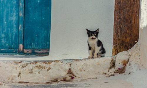 GRECJA / . / Santorini / .