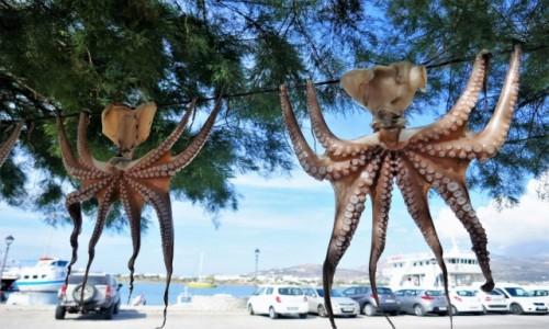 GRECJA / Cyklady / Wyspa Antyparos / Ośmiorniczka