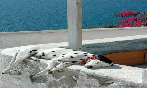 Zdjecie GRECJA / Cyklady  / Santorini, Oia / piesek tez pod