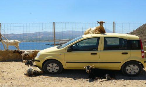 Zdjecie GRECJA / Kreta / droga do balos / Opalamy się